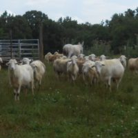 Flock reduction for winter